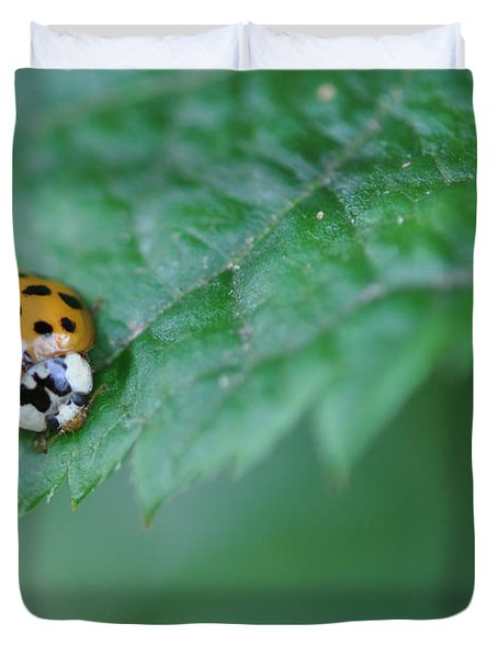 Ladybug Posing On Astilbe Leaf Duvet Cover