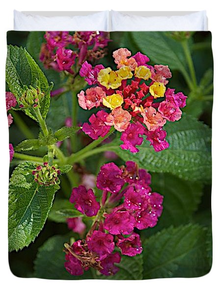 Duvet Cover featuring the photograph Lantana by Joseph Yarbrough