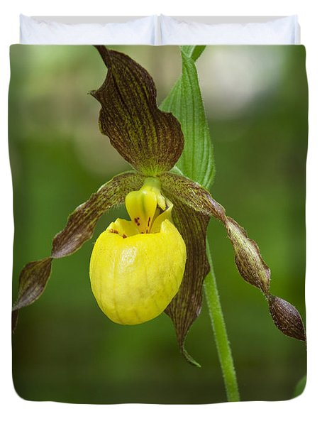 Large Yellow Lady Slipper Orchid Dspf0251 Duvet Cover
