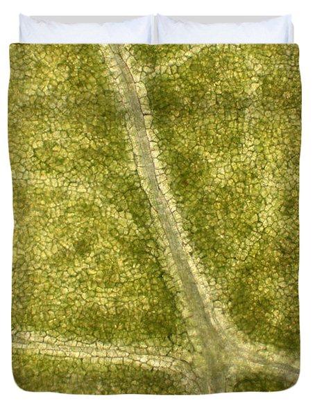 Leaf Vascularization Duvet Cover