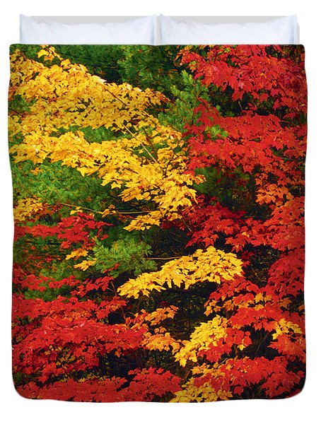 Leaves On Trees Changing Colour Duvet Cover by Mike Grandmailson
