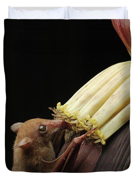 Lesser Long-tongued Fruit Bat Duvet Cover by Ch'ien Lee