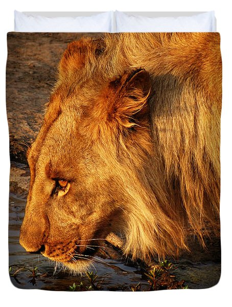 Lion's Pride Duvet Cover by Andrew Paranavitana