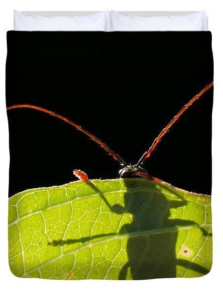 Locust Borer Duvet Cover by Mircea Costina Photography