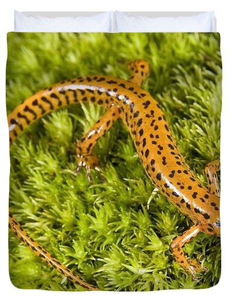 Longtail Salamander Eurycea Longicauda Duvet Cover