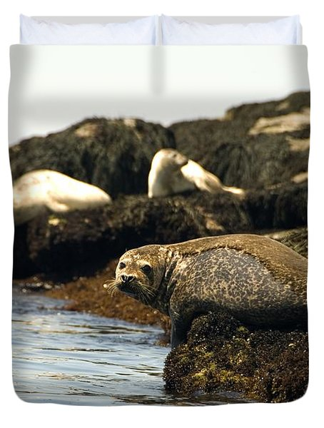 Lounging Seals Duvet Cover by Rick Frost