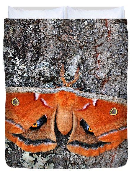 Madam Moth Duvet Cover by Al Powell Photography USA