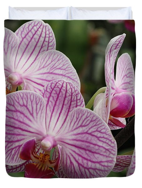 Majestic Orchids Duvet Cover by Carol Groenen