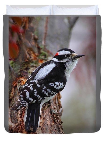 Male Downy Woodpecker Duvet Cover