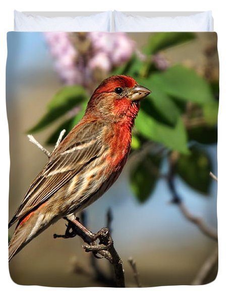 Male Finch Duvet Cover by Alan Hutchins