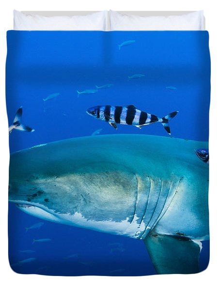Male Great White Shark And Pilot Fish Duvet Cover by Todd Winner
