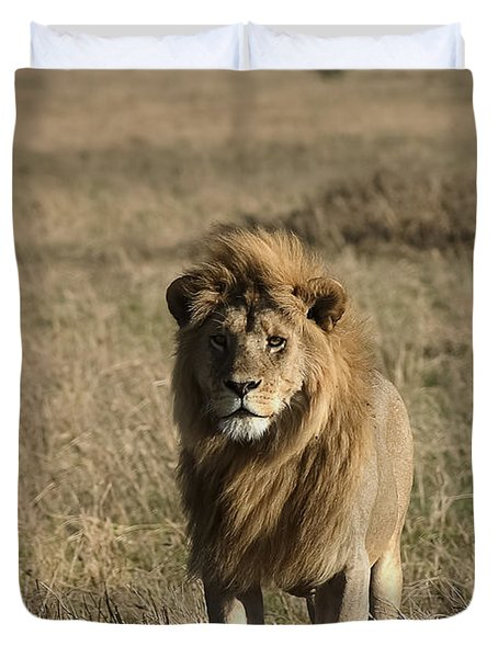 Male Lion's Gaze Duvet Cover by Darcy Michaelchuk