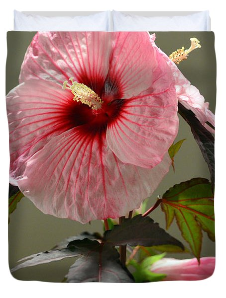 Mallow Hibiscus Duvet Cover by Sandi OReilly