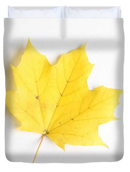 Maple Leaf Duvet Cover by Photo Researchers