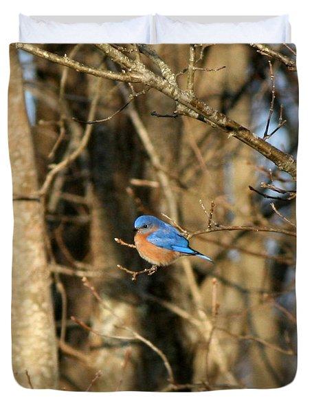 March Bluebird Duvet Cover by Neal Eslinger