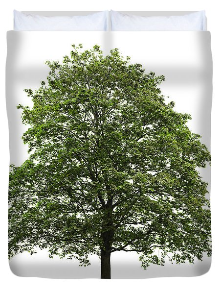 Mature Maple Tree Duvet Cover by Elena Elisseeva