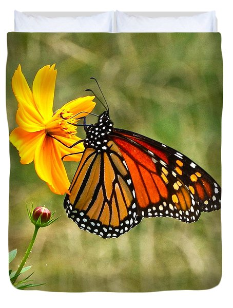 Monarch Butterfly And Yellow Cosmos Duvet Cover by Byron Varvarigos
