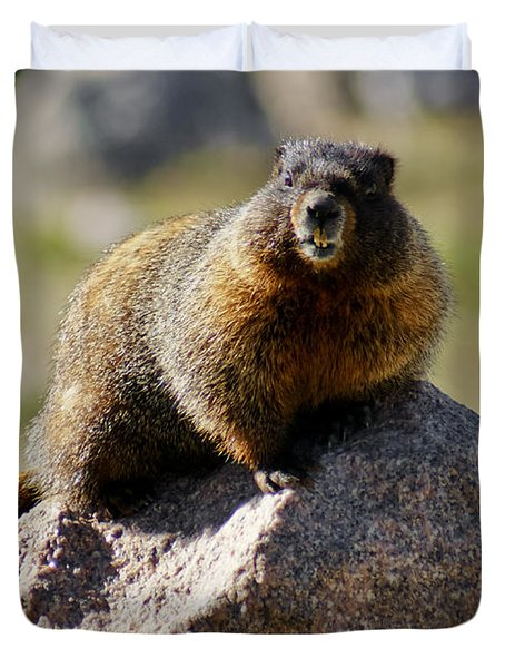 Morning Marmot Duvet Cover by Colleen Coccia