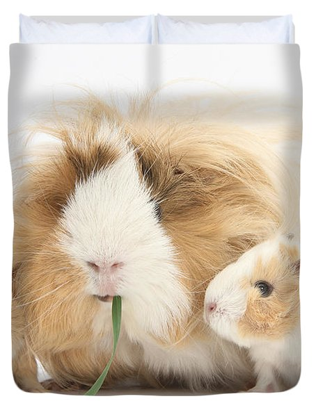 Mother Guinea Pig And Baby Guinea Duvet Cover by Mark Taylor
