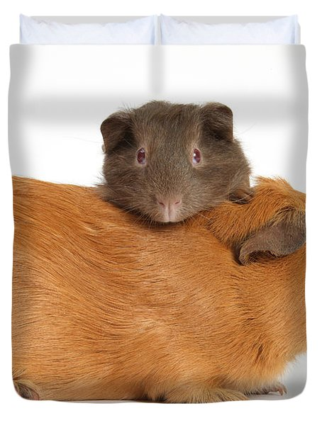 Mother Guinea Pig With Baby Guinea Pig Duvet Cover by Mark Taylor