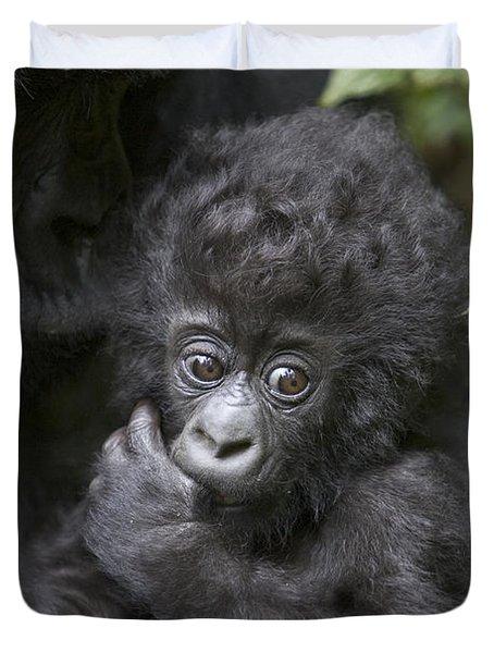 Mountain Gorilla 3 Month Old Infant Duvet Cover by Suzi Eszterhas