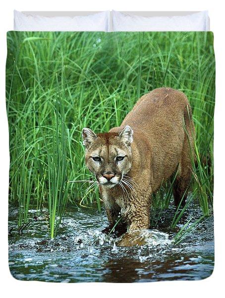 Mountain Lion Puma Concolor Wading Duvet Cover by Konrad Wothe
