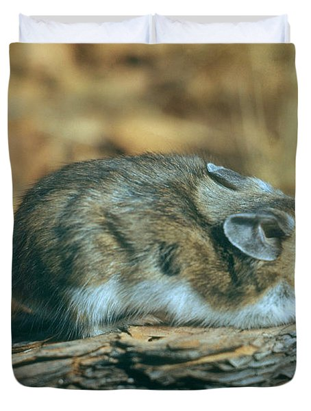 Mouse On A Log Duvet Cover by Photo Researchers, Inc.