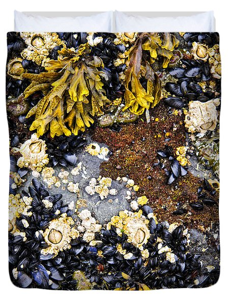 Mussels And Barnacles At Low Tide Duvet Cover by Elena Elisseeva