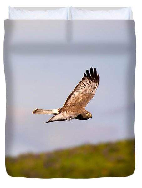 Northern Harrier Flight Duvet Cover by Mike  Dawson