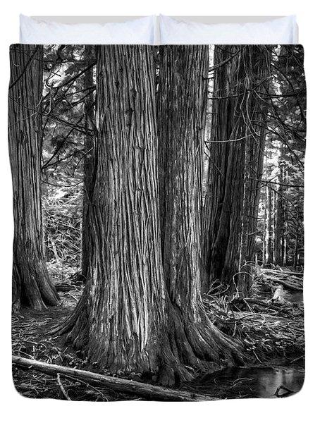 Old Growth Cedar Trees - Montana Duvet Cover by Daniel Hagerman