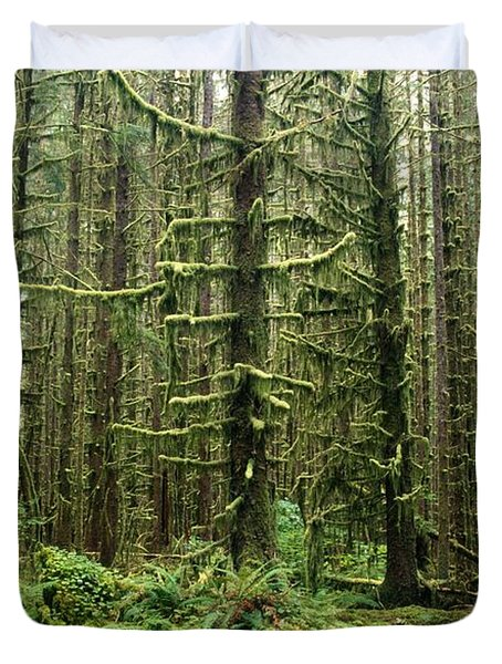 Old Growth Forest In The Hoh Rain Duvet Cover by Natural Selection Craig Tuttle