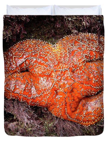 Orange Sea Star Duvet Cover by Mariola Bitner