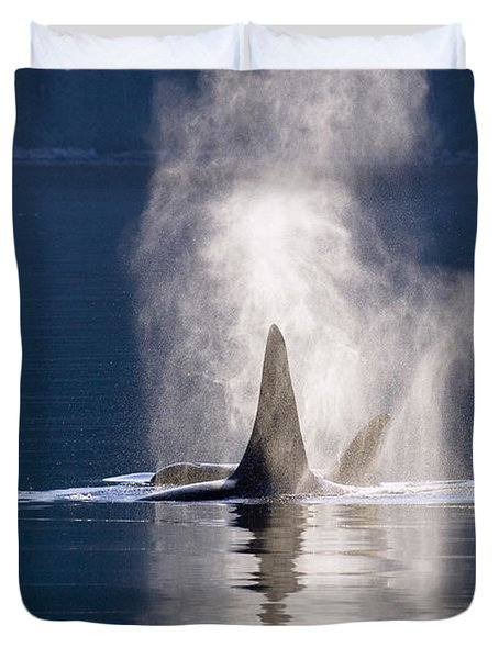 Orca Pair Spouting Southeast Alaska Duvet Cover by Flip Nicklin
