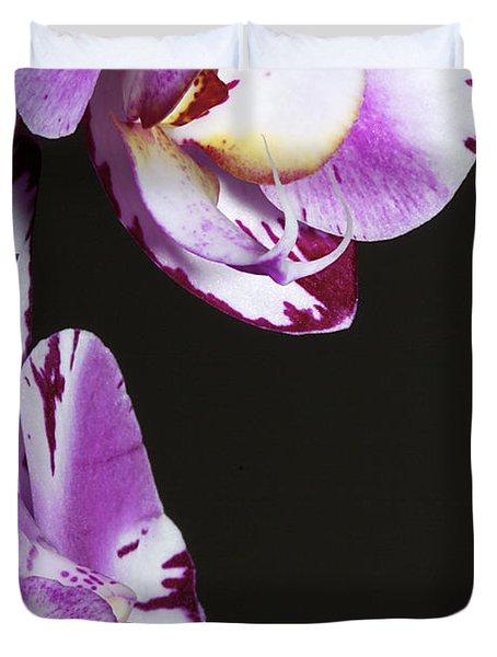 Orchid Stem Duvet Cover by Phyllis Denton