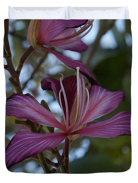 Orchid Tree Duvet Cover by Joseph Yarbrough