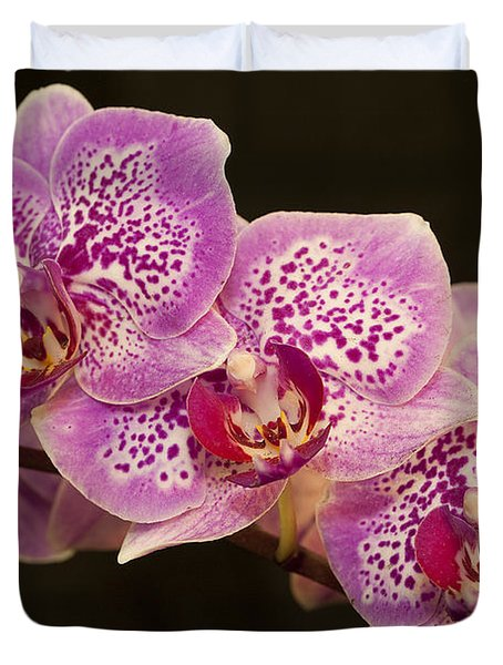 Orchids Duvet Cover by Eunice Gibb