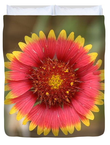 Duvet Cover featuring the photograph Painted Blanket Flower by Donna  Smith