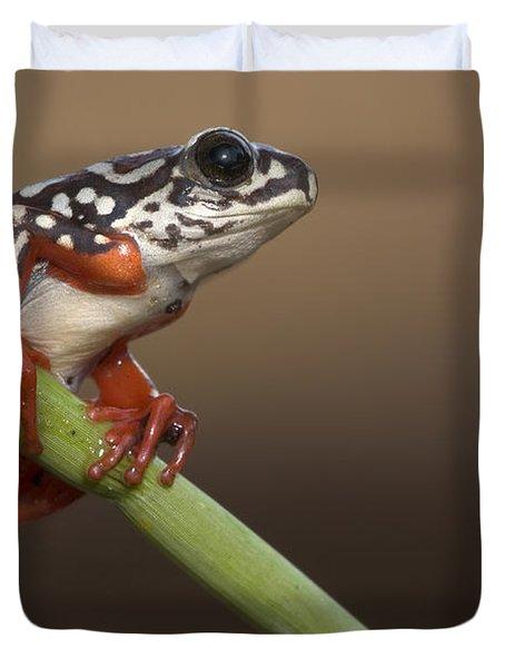 Painted Reed Frog Botswana Duvet Cover by Piotr Naskrecki