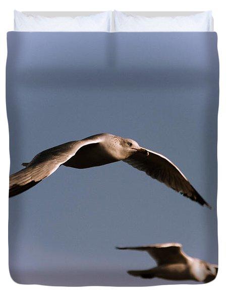 Pair Of Gulls Duvet Cover by Karol Livote