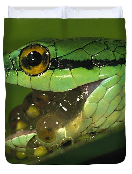 Parrot Snake Eating Tree Frog Eggs Duvet Cover by Christian Ziegler