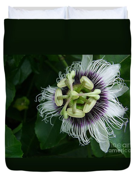 Passion Fruit Flower Duvet Cover by Mary Deal