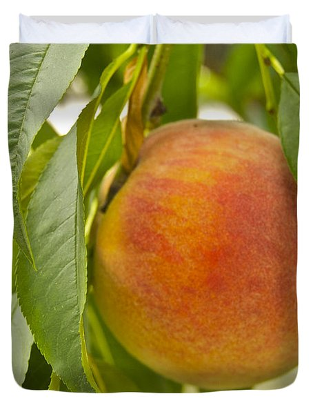 Peachy 2903 Duvet Cover by Michael Peychich