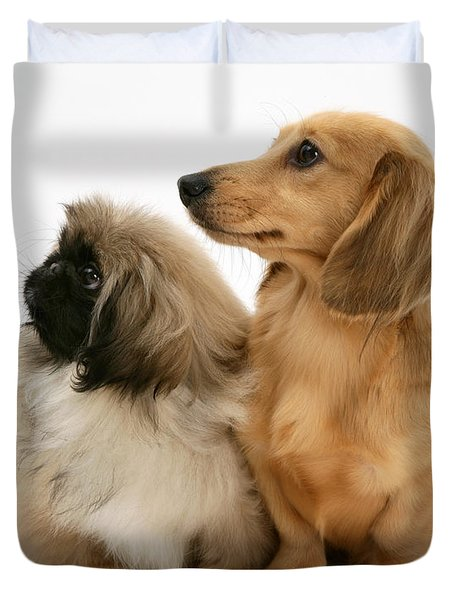 Pekingese And Dachshund Puppies Duvet Cover by Jane Burton