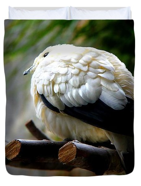 Duvet Cover featuring the photograph Pied Imperial Pigeon by Davandra Cribbie