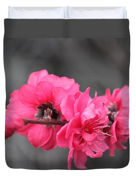 Pink Blossoms  Duvet Cover by Amy Gallagher