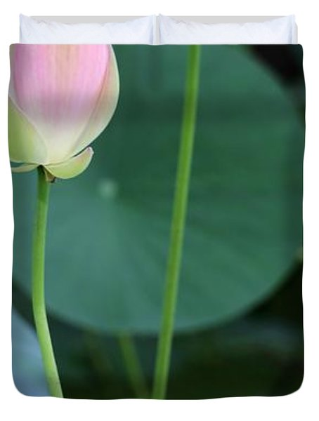 Pink Lotus Buds Duvet Cover by Sabrina L Ryan
