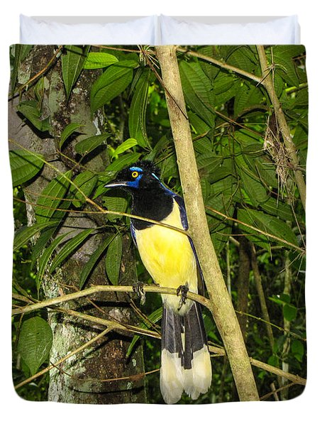 Duvet Cover featuring the photograph Plush-crested Jay by David Gleeson