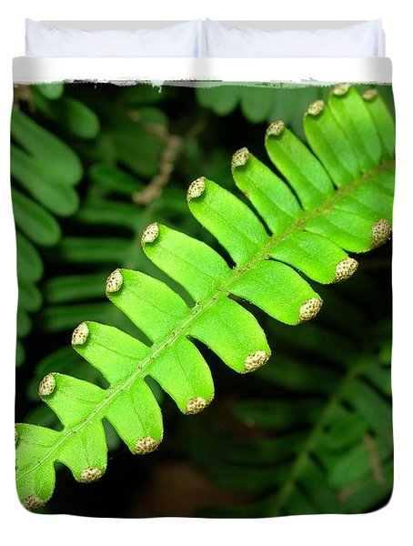 Duvet Cover featuring the photograph Polypody by Judi Bagwell