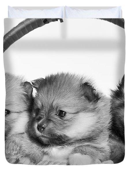 Pomeranian Duvet Cover by Everet Regal