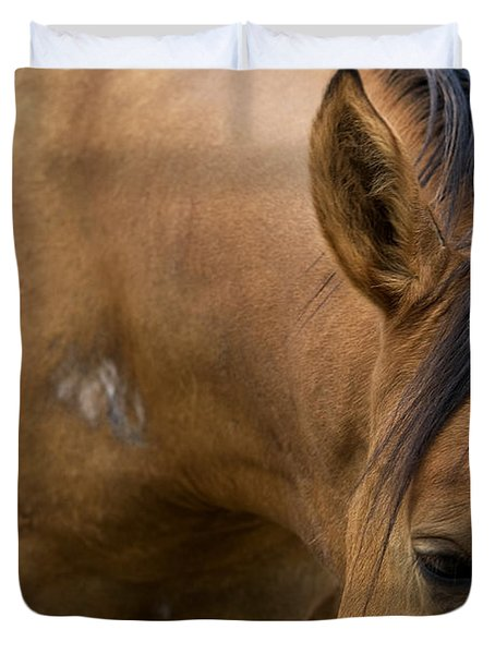 Duvet Cover featuring the photograph Curious Pony by Lorraine Devon Wilke